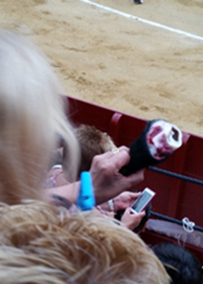 Blog 18_3 , I decided to go see a bullfight image