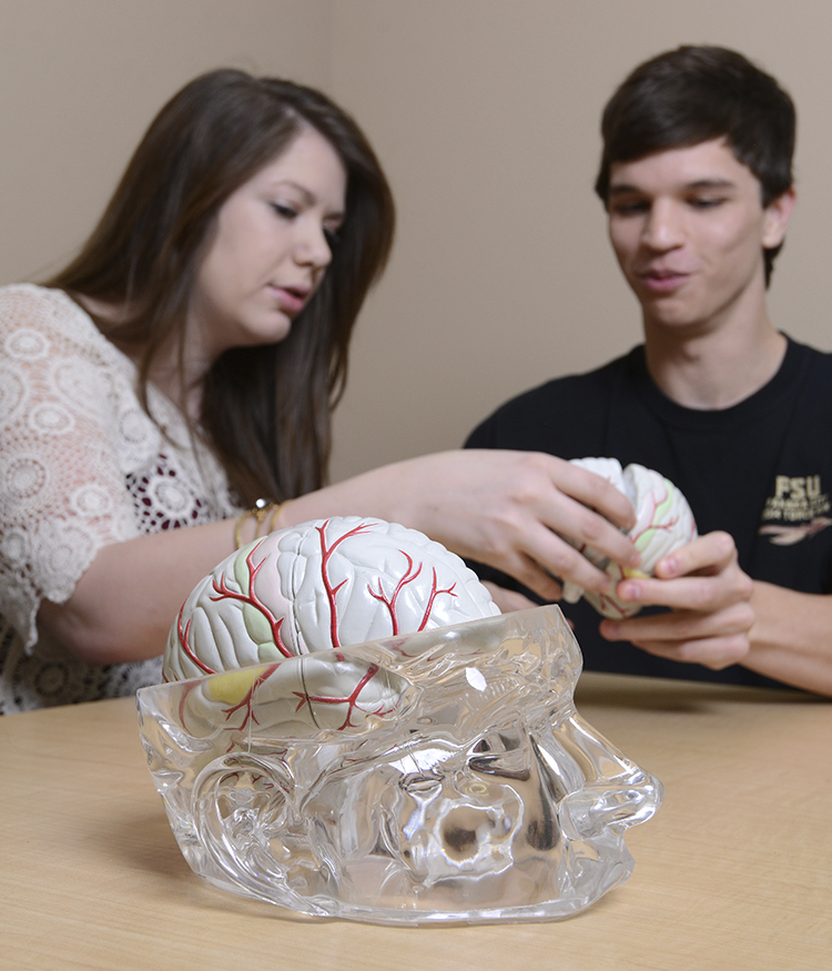 Psychology students examine brain model